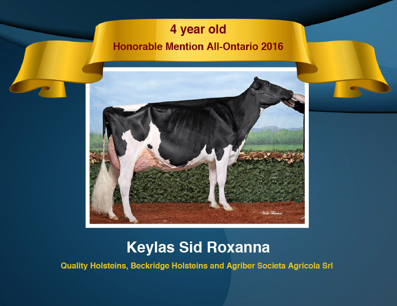 All-Ontario-Holstein-Competition-2016-Certificates-4yr-Old