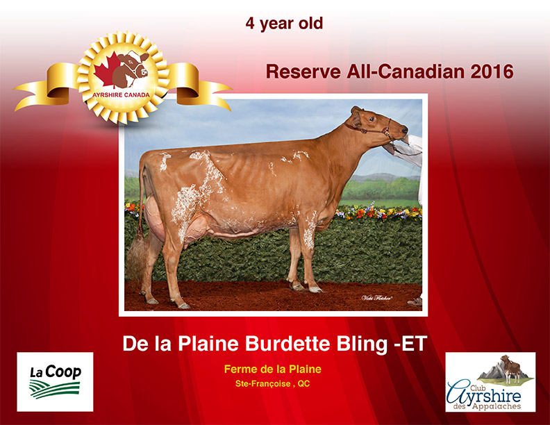 Ayrshire-All-Canadian-Contest-2016-Certificates-4yr-Old-1